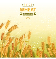 Wheat field vector