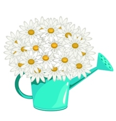 Bouquet of daisies in green garden watering can vector