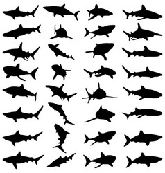 Black shark silhouettes vector image vector image
