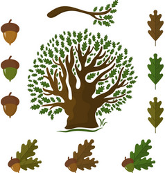 set of icons on an oak tree with leaves and acorns vector image