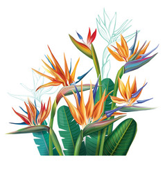 Floral bouquet with strelitzia flowers vector