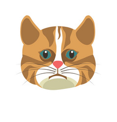 American shorthair brown white cat isolated on vector