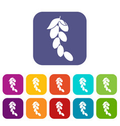 Branch of cornel or dogwood berries icons set flat vector
