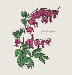 Bleeding heart flower hand drawn colorful vector
