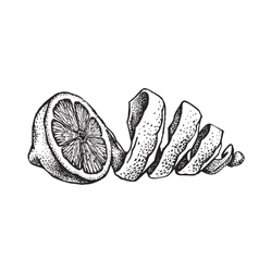 Hand draw of lemon vector