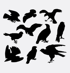 Falcon eagle and hawk bird silhouette vector