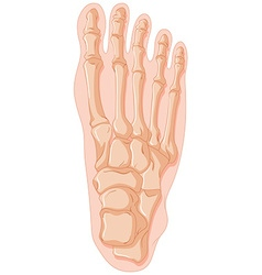 Gout in human bone vector image