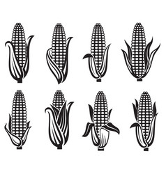 Corn images set vector