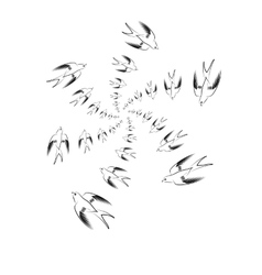 Flying swallow animal pattern vector