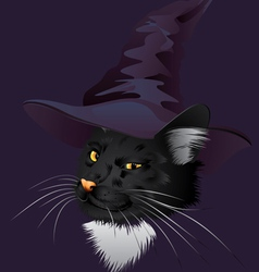 Kitty witchy vector