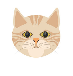 burmilla cat in light color portrait on white vector image vector image