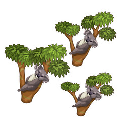 Funny koala bears sleeps on trees animals vector