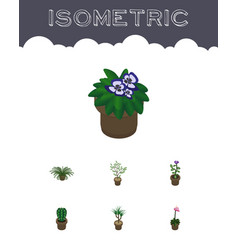 Isometric houseplant set of peyote fern flower vector