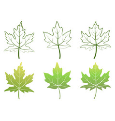 maple leaves and contours vector image vector image