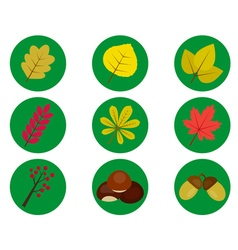 leaves from the trees vector image
