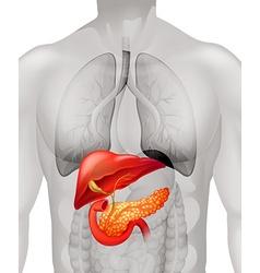 Pancreas cancer in human vector