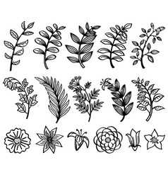 sketch hand drawn branch and leaves vector image vector image