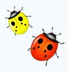 vector ladybird vector image vector image