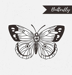 Hand drawn butterfly logo design element on the vector image