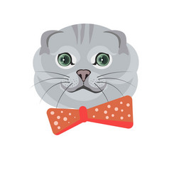 Scottish fold breed of cat in grey color on white vector