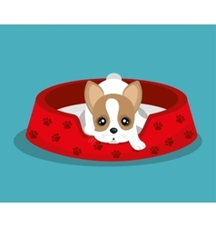 Boston terrier lying in red bed vector