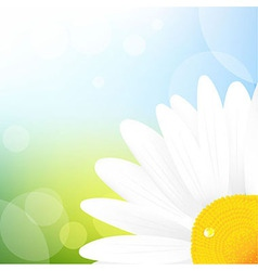 Camomile and blue sky vector