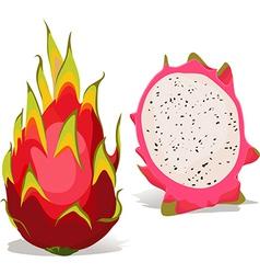 Dragon fruit - vector