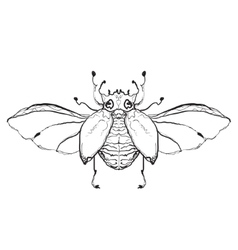 Hand drawn flies insect vector image