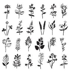 Herbal ink set vector