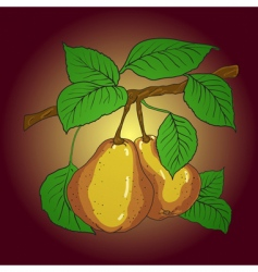 two mature yellow pears vector image vector image