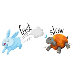 Rabbit runs fast and turtle runs slow vector