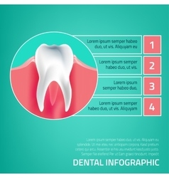 Teeth infographic a-05 vector