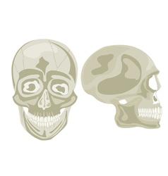 Two human skulls vector