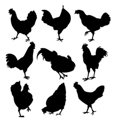 Hen and roster silhouette vector