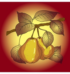 Two mature yellow pears vector