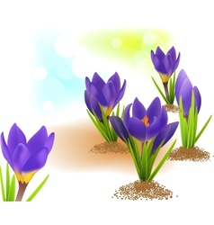 Spring card with crocuses vector image
