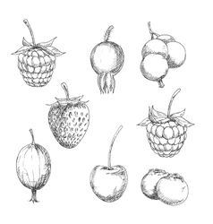 Fresh berry fruits sketches in engraving style vector