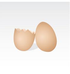 chicken eggs vector image vector image