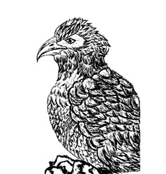 Eagle Sketch2 vector image