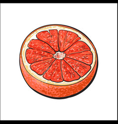 Half of ripe pink grapefruit red orange sketch vector