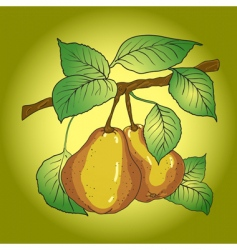 two mature yellow pears vector image