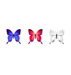 set of colorful butterflies isolated on white vector image vector image