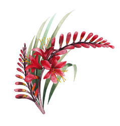 Watercolor crocosmia bouquet vector