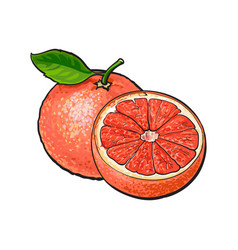 Whole and half unpeeled ripe pink grapefruit vector