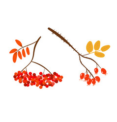 autumnal berries vector image vector image