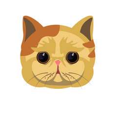 Exotic shorthair kitten in beige color with spots vector
