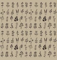 Herbal vintage seamless pattern vector