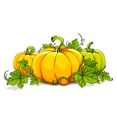 Pumpkins isolated on white vector image vector image