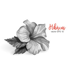 Realistic hibiscus flower leaves monochrome vector