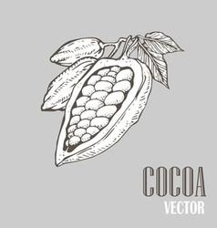 Cocoa vector image vector image
